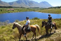 Horse Riding near Hermanus, Overberg with Heaven & Earth Trails. Tucked away… Horse Trails, Adventure Activities, Whale Watching, Heaven On Earth, Horse Riding, Mountain View, Great View, Wine Tasting, Horses