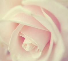 Google Image Result for http://data.whicdn.com/images/23260305/soft_pink_rose_by_marianna9-d4pzyno_large.jpg