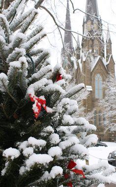 First Snow, From one of my favorite blog stops: Aiken House & Gardens   http://warrengrovegarden.blogspot.com/