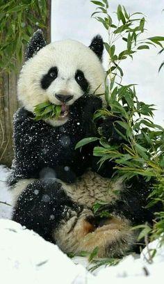 Panda Bamboo China Wild Bear Greenpanda Travel Suitcase Protector Zipper Suitcase Cover Elastic