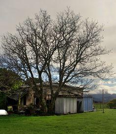 Old house, Spring Creek, Blenheim, Marlborough, New Zealand Holiday Travel, Holiday Trip, Santa Tracker, Family History, New Zealand, Trip Advisor, Abandoned, Around The Worlds, Journey