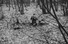 Bellevue Forest, Paris (woman reading in leaf falling woods), Kertesz