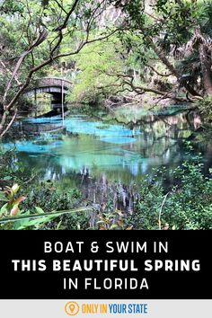 Swim, boat, and relax in this beautiful natural spring in Florida. You'll love the clear blue water and camp nearby. It's perfect for a family-friendly summer day trip or weekend getaway.