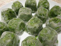 Cómo congelar y preservar Hierbas frescas en Aceite - Vida Lúcida