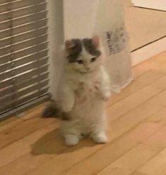 Cute Baby Cats, Cute Little Animals, Cute Funny Animals, Kittens Cutest, Cats And Kittens, Funny Cats, Cute Kitty, Baby Kitty, Gato Anime