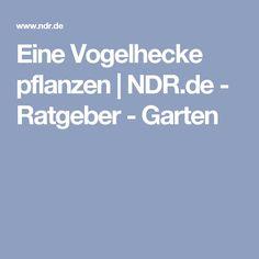 Eine Vogelhecke pflanzen   NDR.de - Ratgeber - Garten