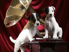 perros con musica - Buscar con Google