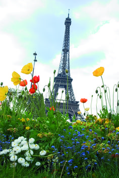 I will visit Paris in the springtime. I will sit outdoors sipping cafe au lait and eating a croissant. I will then purchase one amazing pair of shoes along the Champs d'Elysees. And there is the Eiffel Tower again! Paris In Spring, Springtime In Paris, Torre Eiffel Paris, Paris Eiffel Tower, Rio Sena, Cvc, Paris Tour, I Love Paris, France Travel