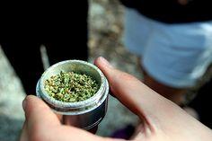 Weed   Marijuana   Cannabis