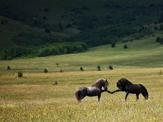 The horses(: Love and peace to the American mustang. Long may you run...