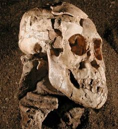 fossil remains of Selam, a 3-year-old human ancestor.