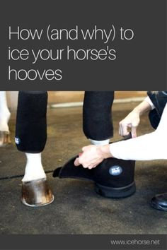 It's not just a case of laminitis that warrants you horse needing some ice therapy on his hooves. There are situations where ice can help prevent laminitis!