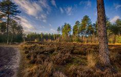 Den Treek #2, Leusden, The Netherlands - Den Treek, Leusden, The Netherlands
