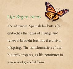 The meaning behind the Mariposa, inspiration behin Butterfly Tattoo Meaning, Butterfly Quotes, Butterfly Tattoo Designs, Butterfly Art, Blue Butterfly Meaning, You Give Me Butterflies, Beautiful Butterflies, Butterfly Spirit Animal, Meant To Be Quotes