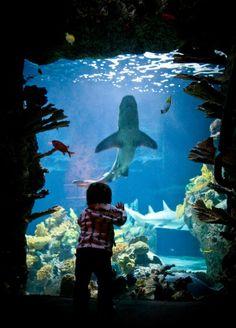 Amazing Point Defiance Zoo & Aquarium > Aquariums photo #Aquariums