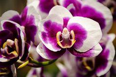 Do you see the angel? - 'Purple Beauty' - http://fineartamerica.com/featured/purple-beauty-penny-lisowski.html via @fineartamerica
