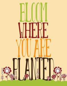 Bloom where you are planted (one of my favorite quotes...don't just survive...thrive!)
