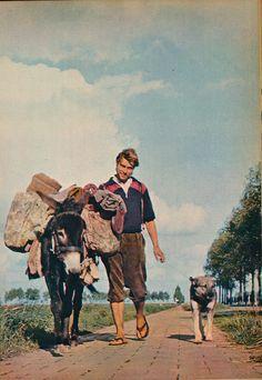 Zuidbeverland werkezel 1961.     Courtesy: janwillemsen (Netherlands).