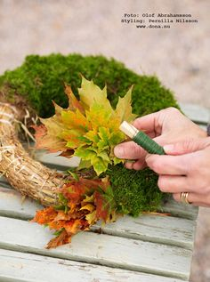 Going to do this with the moss, but incorporate spring flowers rather than autumn. should be able to update with each season! Autumn Crafts, Spring Crafts, Holiday Crafts, Fall Wreaths, Door Wreaths, Thanksgiving Decorations, Christmas Decorations, Grave Decorations, Classy Christmas