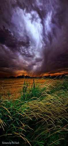"""""""I Will Survive"""" Horizons Milwaukee, Wisconsin, USA by Phil Koch."""