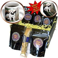 Dogs Labrador Retriever  Cute Yellow Lab Puppy  Coffee Gift Baskets  Coffee Gift Basket cgb_969_1 <3 Click the VISIT button to find out more