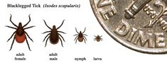 The CDC statement on Lyme disease. I do not believe that this is correct information.