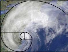 15 Uncanny Examples of the Golden Ratio in Nature