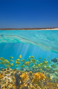 Ningaloo Reef is a fringing coral reef located off the west coast #Australia