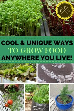 Great ways to grow food no matter where you live!