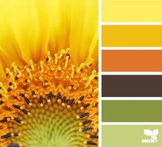 Design seeds are color palettes created by designer jessica colaluca. explore thousands of combinations to inspire your life's palette. Scheme Color, Colour Pallette, Color Palate, Colour Schemes, Color Combinations, Design Seeds, Sunflower Colors, Orange Design, Color Stories