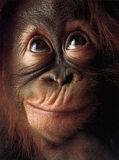 Monkey Face  By Tim Flach