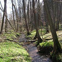 Las łęgowy – Wikipedia, wolna encyklopedia