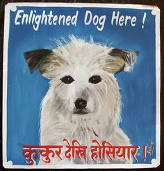 Enlightened Dog Here!