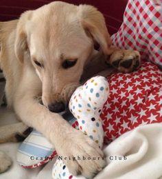 Wie ihr ganz leicht ein schönes Hundekissen und einen Spieleknochen näht, zeigen wir hier. Mit Schritt-für-Schritt-Anleitung.