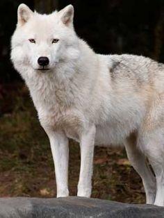 Características de este espectacular animal.