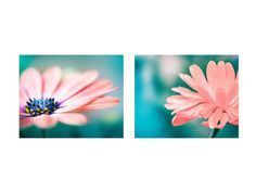 nature photography flower set of 2 8x10 by mylittlepixels on Etsy