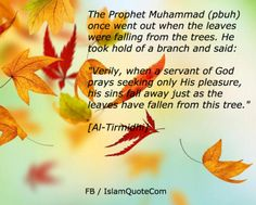 Prophet Muhammad (pbuh): sins fall away just as the leaves have fallen from this tree   | Islam Quote