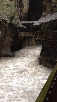 Les Gorges dans la  tempête Plants, Switzerland, Planters, Plant