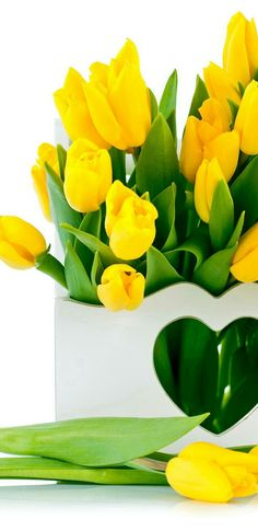 Tulips flowers all color google search my flower pinterest more information more information yellow tulips spring flowers mightylinksfo