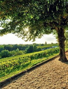 Make our own #wine experience in #Bordeaux