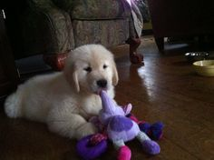 Cutter's first day home.