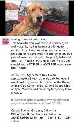 1/8/17 PLEASE READ RAY's STORY! SHARE HIM WIDELY SO HE MIGHT BE HAPPY AGAIN! /ij https://m.facebook.com/savingcarsonshelterdogs/photos/a.219655291540446.1073741846.171850219654287/712520862253884/?type=3&theater