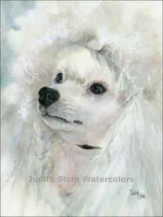 WHITE POODLE Miniature Dog 11x15 Giclee Watercolor by k9stein, $40.00