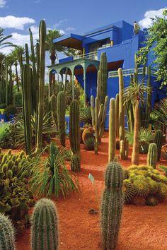 YSL's Jardin Majorelle in Marrakech. Visit Marrakech, Marrakech Morocco, Marrakech Gardens, Kew Gardens, Landscape Design, Garden Design, Desert Landscape, Plant Design, Morocco Travel
