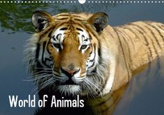 World of animals UK Version 2014 #calvendo
