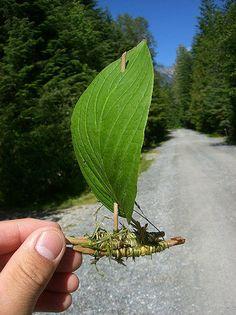 leave twig boat craft
