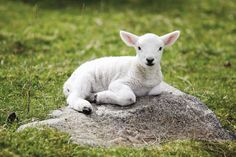 Les 39 bébés animaux les plus craquants du monde animal qui vous feront fondre de tendresse | Daily Geek Show