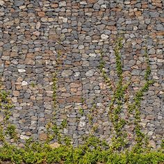 Rock wall with vines -love this