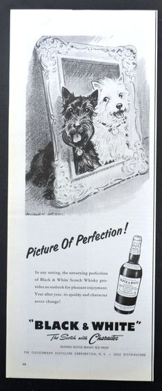 1959 Black & White Blended Scotch Whisky Vintage Print Ad - Scottish Terriers - Picture of Perfection