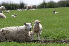 images ireland countryside - Google Search